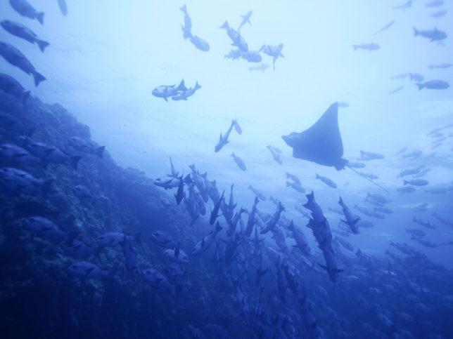 T0017「海の近くに住んで釣りを続けていきながら水産試験場で海について調べたい」